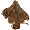 Full Grouse Skin