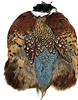 Ring Neck Pheasant Skin