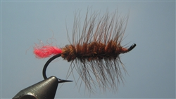 Woolly Worm, Brown