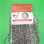 Whiting Quarter Saddle